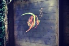 Fish, Stencil graffiti in private garden Amsterdam July, 2014